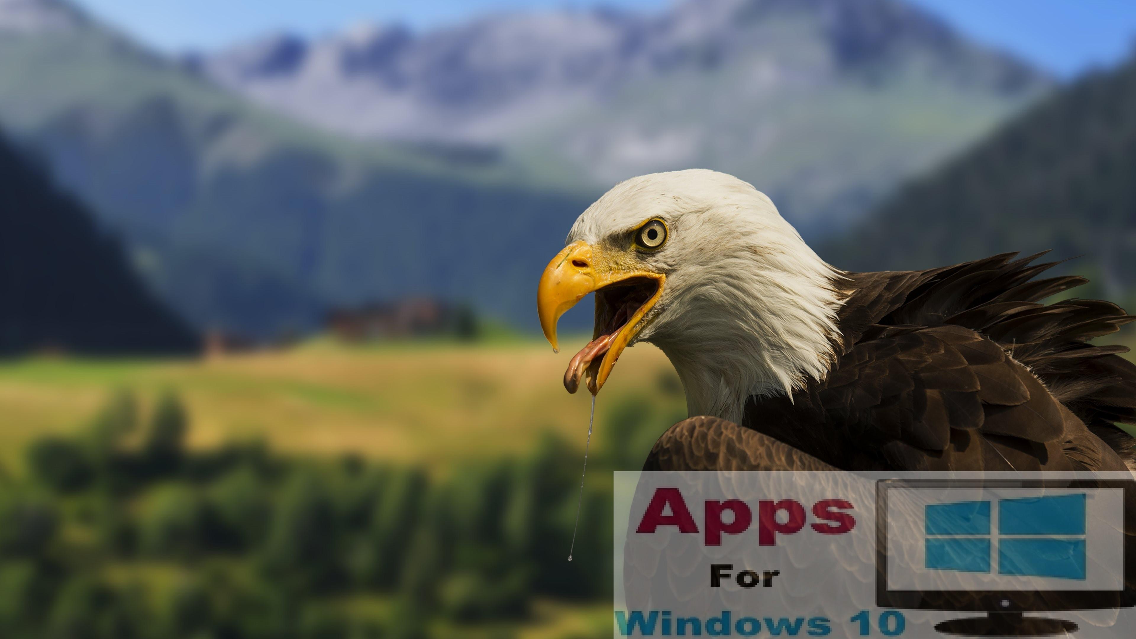 Beautiful-Bald-Eagle-4K-Wallpaper