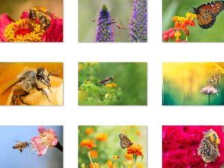 birds bees and butterflies windows 10 theme